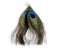Påfågelörhängen